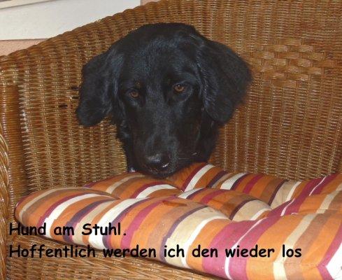 Hund am Stuhl