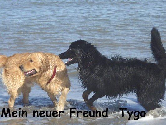 Mein neuer Freund Tygo
