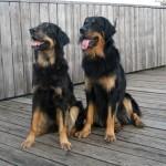 Leo und Daika