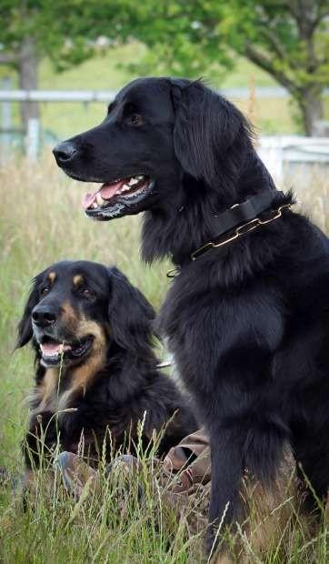 Daika und Chenna (2)